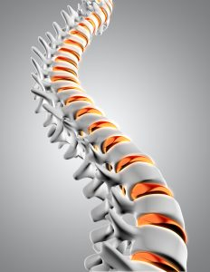 "<img src = ""spinal.jpg""/> alt = ""Close up of a spine with the discs highlighted""/>"