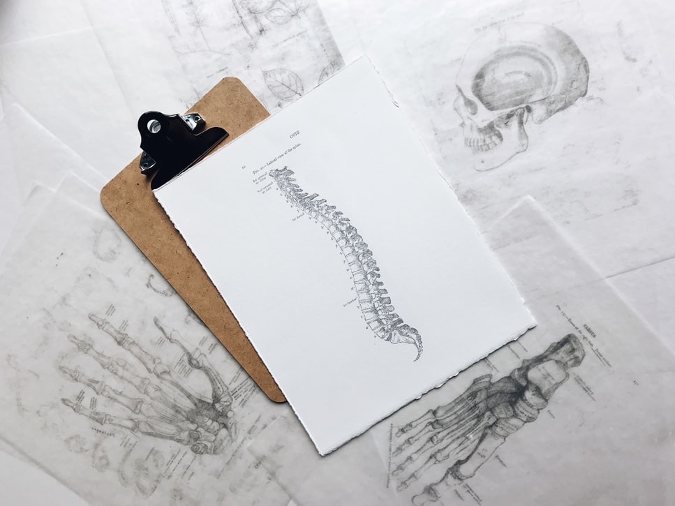 spine outline on a clipboard